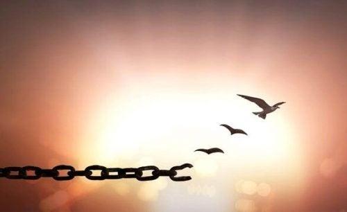 Fugle bryder fri fra lænker