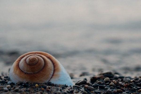 tinnitus lyder som bølger i havet, ringen eller summen