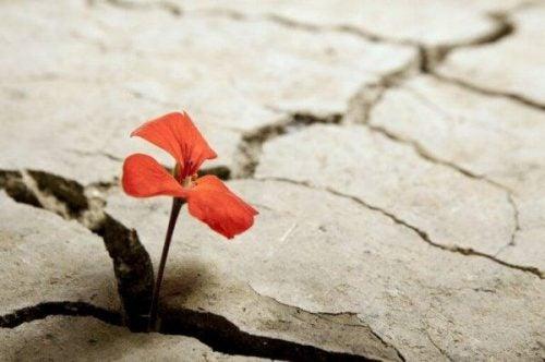 Lille rød blomst vokser op gennem asfalten. Optimistiske personer