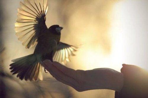 En hånd holder en lille fugl