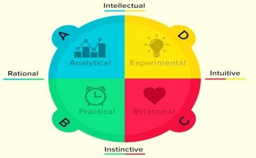 Hjerne dominans ifølge Herrmanns kvadrater: Hvad er din type?