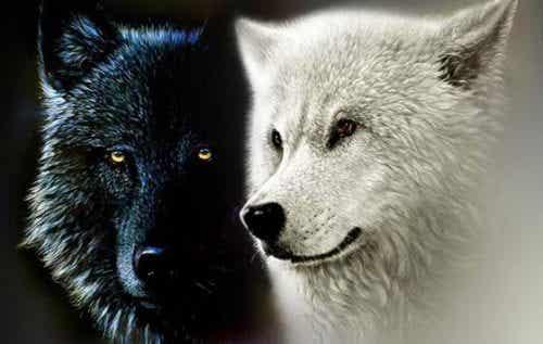 Cherokee-indianernes legende om de to ulve