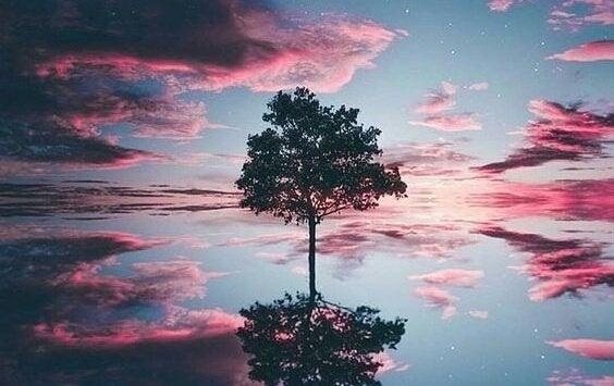 træ i vandet