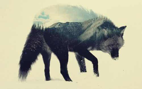 Steppenwolf: en bog til at hjælpe dig med at reflektere