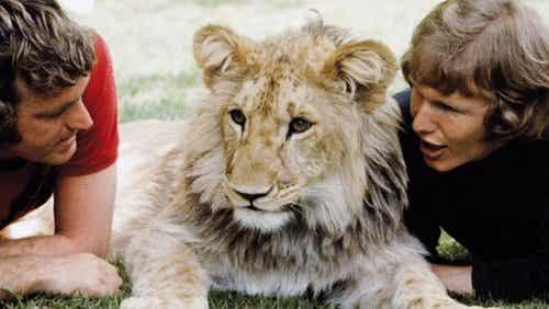 Den hjertevarmende historie om løven Christian
