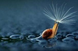 Nærbillede af en snegl
