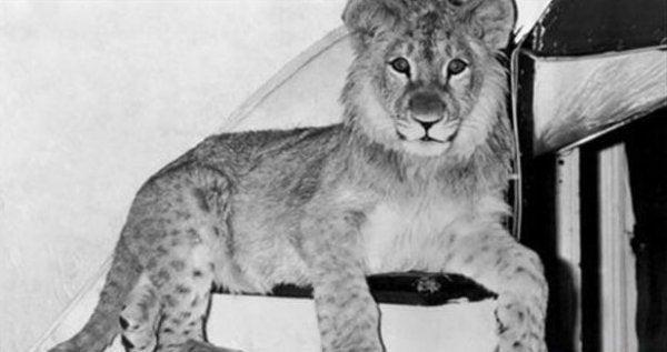 Løven Christian som unge