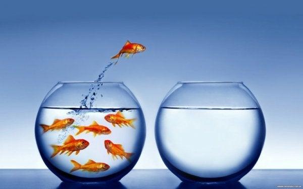 Guldfisk hopper fra en bowle til en anden