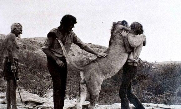 Løven Christian krammer sin menneskelige ven