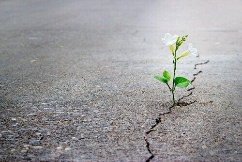 Blomst vokser ud af revne i asfalt
