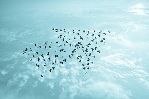 Fugle danner pil