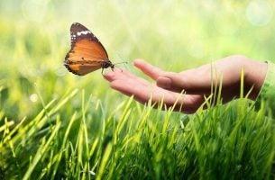 En sommerfugl sidder på en hånd