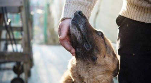 En hund bliver kærtegnet af et menneske