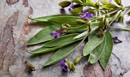Fordele ved salvie, planten til kvinder
