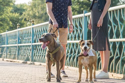 en tur med hunden giver altid mulighed for samtaler