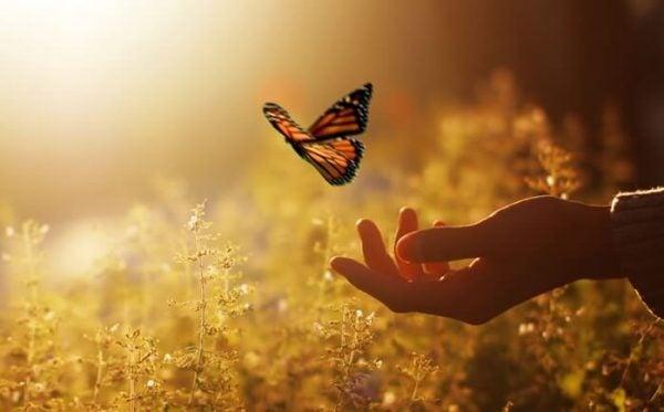 Hånd sætter sommerfugl fri