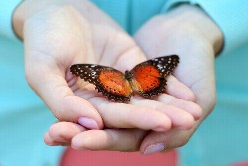 Sommerfugl i hænder