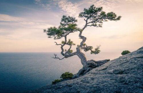 Et træ på siden af et bjerg