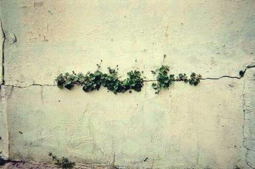 Du kan overvinde alt, som dette ukrudt, der gror ud af muren