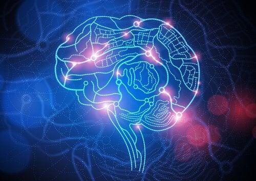Hjerne lyser op i blå og røde farver