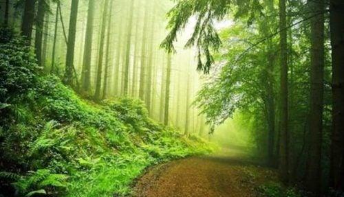 Frodig grøn skov