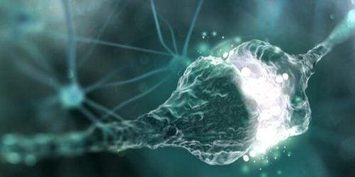 Hvad er en synapsespalte til overførsel af information?