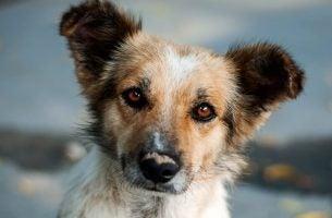 Historie om refleksion omhandler hunde