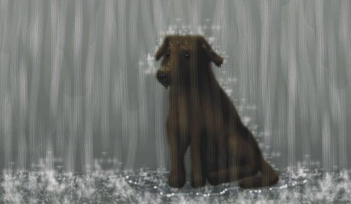 En hund i regnvejr