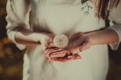 Kvindes hænder holder en mælkebøtte