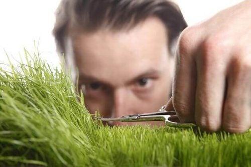 Perfekt trimning af græs