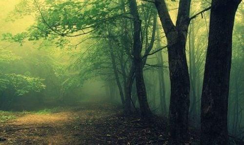 Smuk grøn skov