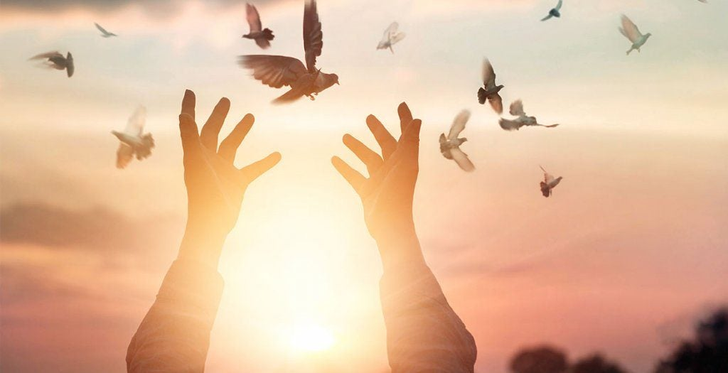 Person sætter fugle fri