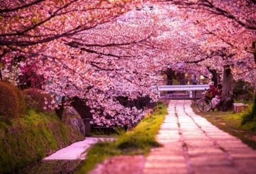 Yohiro og Sakura voksede til sidst sammen og begyndte at blomstre