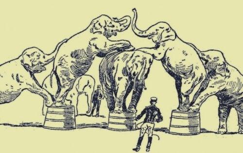 elefanter, der laver tricks i cirkus