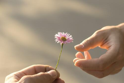 Hånd giver anden hånd en blomst