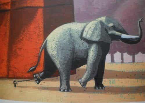 Den smukke historie om den lænkede elefant