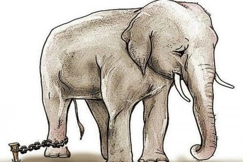 Den lænkede elefant