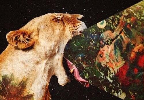 løve kaster billeder op