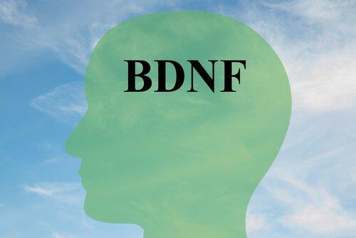 Sådan kan du øge niveauet af BDNF