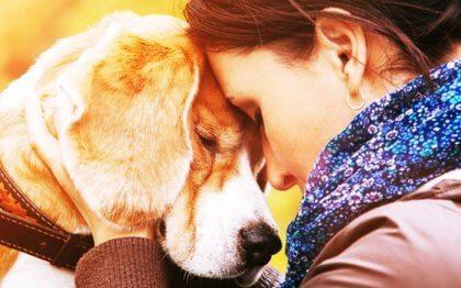 Derfor kommer vi til at elske dyr så meget