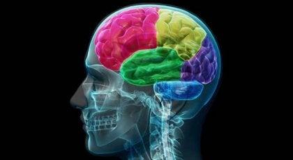 Misbrugerens hjerne: Anatomien af tvang og behov