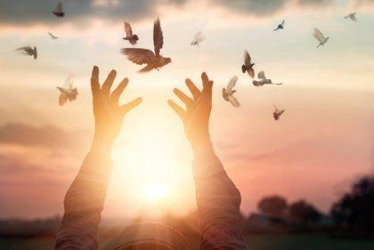 Hænder sætter fugle fri