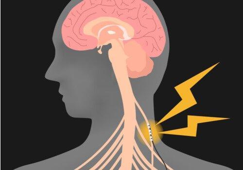 Stimulering af vagusnerven er forbundet med mange vigtige organer