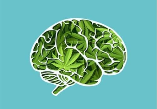 De langsigtede indvirkninger af cannabis på hjernen