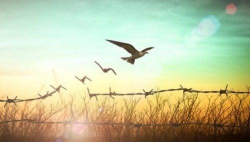 Pigtrådshegn bliver til frie fugle