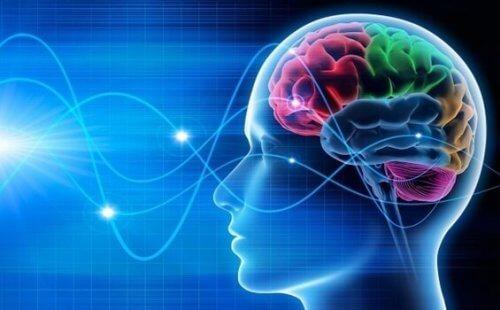 Hjernen viser samme aktivitet i REM fasen, som var vi vågne