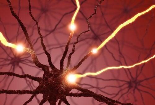 Lys i neuroner illustrerer neurogenetik