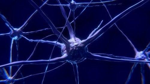 Neuroner: Hvad er de og hvordan fungerer de?