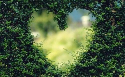 Hjerteformet udsnit i en busk