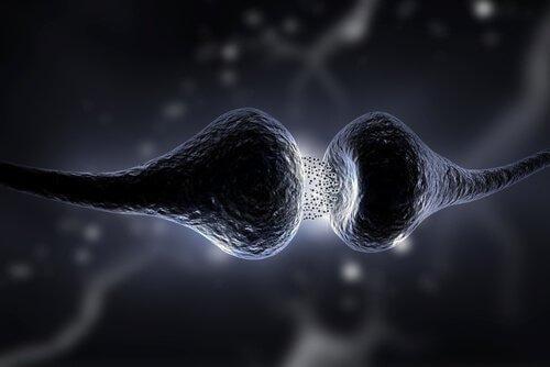 Neurotransmittere påvirker synapserne i neuronerne